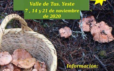 XII Jornadas Micológicas Valle de Tus 2020. Yeste